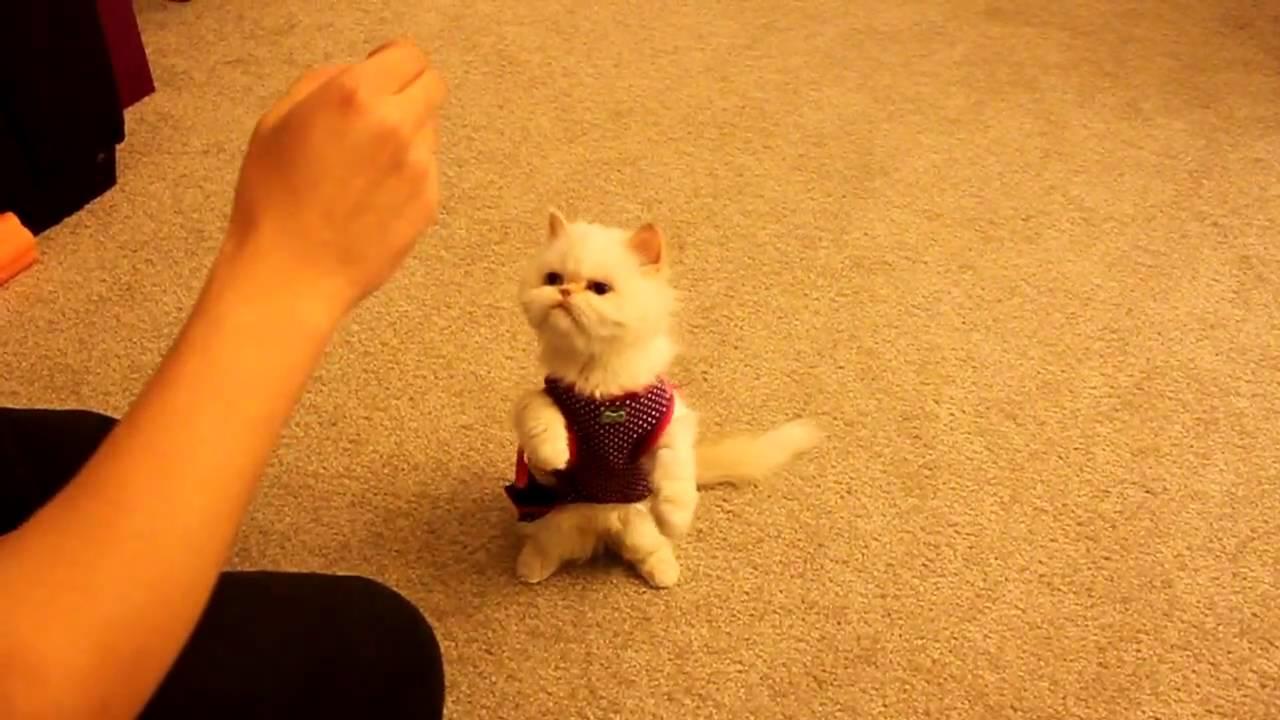 cat keeps getting uti