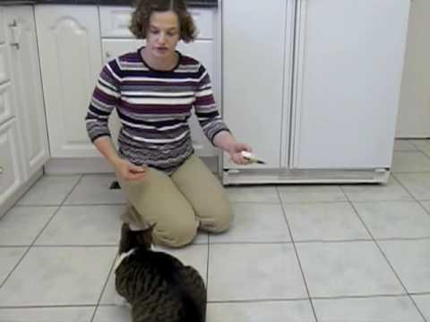 cat grant advice